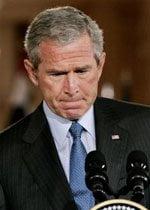 Bush Sad